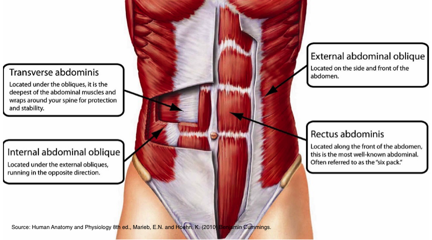 core - abdominals - The Pilates Works